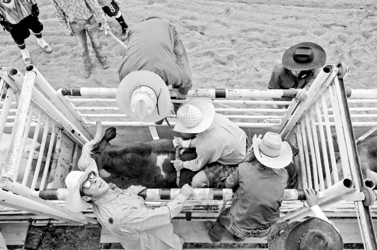 RODEO071.jpg A bull rider gets ready to ride during the CPRA Rodeo at the Boulder County Fairgrounds on Sunday. Go to timescall.com for more photos. Matthew Jonas / Staff Photographer Aug. 2, 2015
