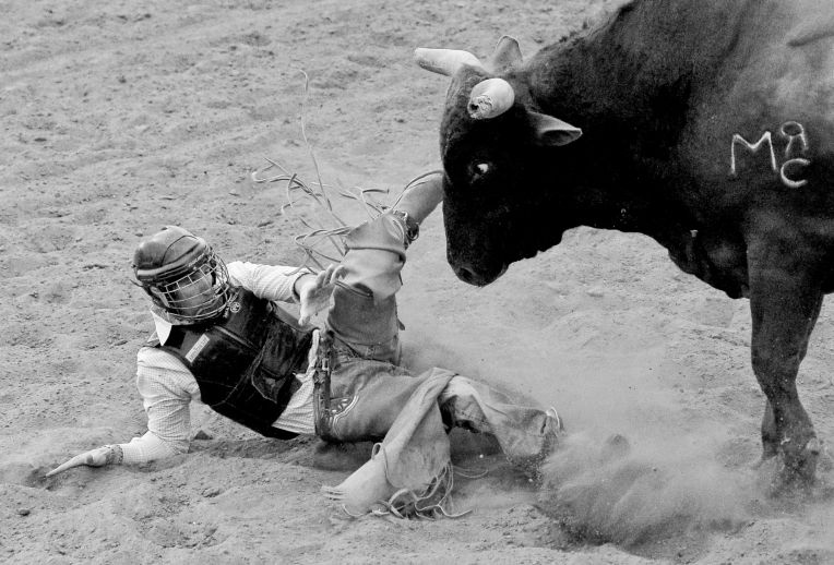 RODEO225.jpg Bullrider Cyler Doremus gets face to face with a bull after being thrown off during the CPRA Rodeo at the Boulder County Fairgrounds on Sunday. Go to timescall.com for more photos. Matthew Jonas / Staff Photographer Aug. 2, 2015