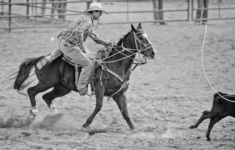 RODEO584.jpg Dean Geesen jumps off his horse to tie down a calf during the CPRA Rodeo at the Boulder County Fairgrounds on Sunday. Go to timescall.com for more photos. Matthew Jonas / Staff Photographer Aug. 2, 2015