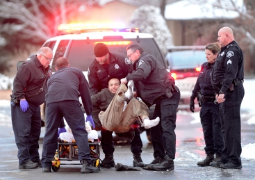 Boulder County Sheriff's deputies assist Mountain View Fire Rescue paramedics with placing car jacking suspect, Frank Richard Duran, 29, onto a stretcher in Niwot on Wednesday. The suspect was complaining of having a seizure. The car was stolen from Weld County. Matthew Jonas / Staff Photographer Feb. 4, 2015