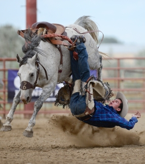 Saddle Bronc rider Nile Thompson is bucked off his ride during the CPRA Rodeo at the Boulder County Fairgrounds on Sunday. Go to timescall.com for more photos. Matthew Jonas / Staff Photographer Aug. 2, 2015