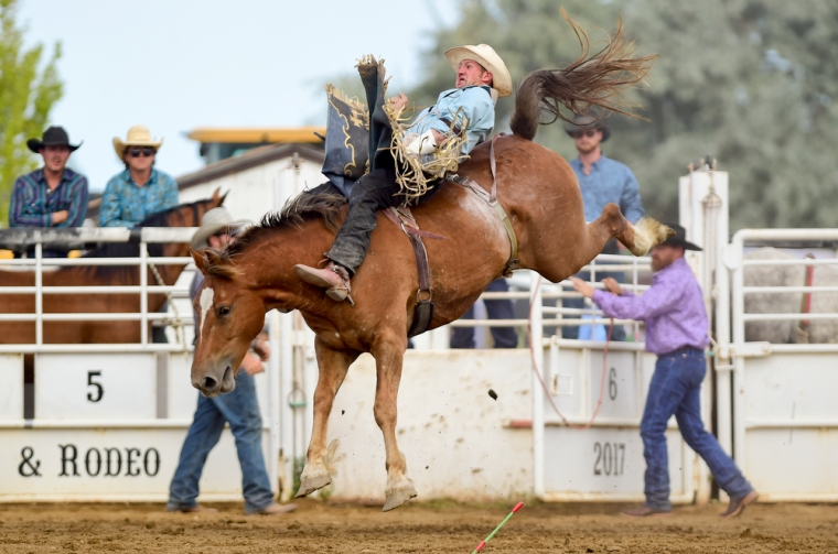 Bareback rider Tyler Ferguson tries to hold on during the CPRA sanctioned rodeo on Sunday at the Boulder County Fair in Longmont. The rodeo featured nine events including bareback riding, steer wrestling, tie-down roping, breakaway roping, saddle bronco riding, mixed team roping, open team roping, ladies barrel racing and bull riding. More photos: timescall.com. Matthew Jonas/Times-Call July 30, 2017