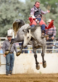 Bare back rider David Strewler tries to hang on during the CPRA sanctioned rodeo on Sunday at the Boulder County Fair in Longmont. The rodeo featured nine events including bareback riding, steer wrestling, tie-down roping, breakaway roping, saddle bronco riding, mixed team roping, open team roping, ladies barrel racing and bull riding. More photos: timescall.com. Matthew Jonas/Times-Call July 30, 2017