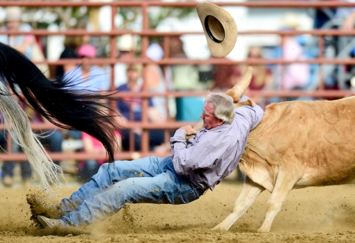 Kenny Johnson hangs on tight while losing his hat during steer wrestling at the CPRA sanctioned rodeo on Sunday at the Boulder County Fair in Longmont. The rodeo featured nine events including bareback riding, steer wrestling, tie-down roping, breakaway roping, saddle bronco riding, mixed team roping, open team roping, ladies barrel racing and bull riding. More photos: timescall.com. Matthew Jonas/Times-Call July 30, 2017