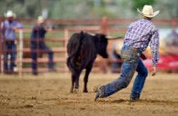 Brady Buum watches a steer trot away during the steer wrestling competition at the CPRA sanctioned rodeo on Sunday at the Boulder County Fair in Longmont. The rodeo featured nine events including bareback riding, steer wrestling, tie-down roping, breakaway roping, saddle bronco riding, mixed team roping, open team roping, ladies barrel racing and bull riding. More photos: timescall.com. Matthew Jonas/Times-Call July 30, 2017