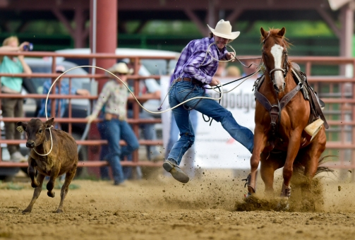 Jack Tyner jumps from his horse during the tie-down roping competition at the CPRA sanctioned rodeo on Sunday at the Boulder County Fair in Longmont. The rodeo featured nine events including bareback riding, steer wrestling, tie-down roping, breakaway roping, saddle bronco riding, mixed team roping, open team roping, ladies barrel racing and bull riding. More photos: timescall.com. Matthew Jonas/Times-Call July 30, 2017