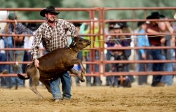Jesse Sheffield holds onto a calf during the tie-down roping competition at the CPRA sanctioned rodeo on Sunday at the Boulder County Fair in Longmont. The rodeo featured nine events including bareback riding, steer wrestling, tie-down roping, breakaway roping, saddle bronco riding, mixed team roping, open team roping, ladies barrel racing and bull riding. More photos: timescall.com. Matthew Jonas/Times-Call July 30, 2017