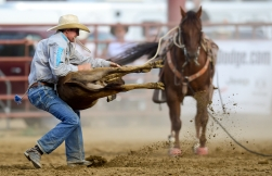 Jase Stoudt hangs onto a calf during the tie-down roping competition at the CPRA sanctioned rodeo on Sunday at the Boulder County Fair in Longmont. The rodeo featured nine events including bareback riding, steer wrestling, tie-down roping, breakaway roping, saddle bronco riding, mixed team roping, open team roping, ladies barrel racing and bull riding. More photos: timescall.com. Matthew Jonas/Times-Call July 30, 2017