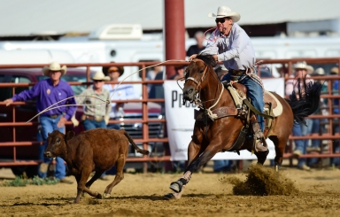 Garrett Arnold chases down a calf during tie-down roping competition at the CPRA sanctioned rodeo on Sunday at the Boulder County Fair in Longmont. The rodeo featured nine events including bareback riding, steer wrestling, tie-down roping, breakaway roping, saddle bronco riding, mixed team roping, open team roping, ladies barrel racing and bull riding. More photos: timescall.com. Matthew Jonas/Times-Call July 30, 2017