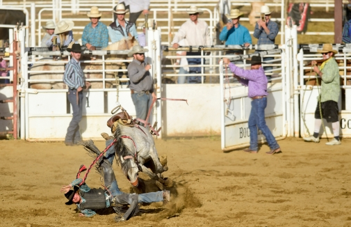 Saddle Bronc Rider Marcus Wagler gets bucked during the CPRA sanctioned rodeo on Sunday at the Boulder County Fair in Longmont. The rodeo featured nine events including bareback riding, steer wrestling, tie-down roping, breakaway roping, saddle bronco riding, mixed team roping, open team roping, ladies barrel racing and bull riding. More photos: timescall.com. Matthew Jonas/Times-Call July 30, 2017