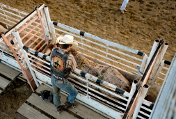 Bull Rider Grant Zonneveld stands next to bulls in the chutes before his ride during the CPRA sanctioned rodeo on Sunday at the Boulder County Fair in Longmont. The rodeo featured nine events including bareback riding, steer wrestling, tie-down roping, breakaway roping, saddle bronco riding, mixed team roping, open team roping, ladies barrel racing and bull riding. More photos: timescall.com. Matthew Jonas/Times-Call July 30, 2017