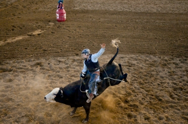 Bull Rider Nick Cooley tries to hang on during the CPRA sanctioned rodeo on Sunday at the Boulder County Fair in Longmont. The rodeo featured nine events including bareback riding, steer wrestling, tie-down roping, breakaway roping, saddle bronco riding, mixed team roping, open team roping, ladies barrel racing and bull riding. More photos: timescall.com. Matthew Jonas/Times-Call July 30, 2017